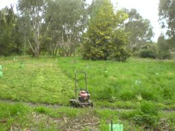 Mowed the woodland