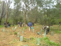 RMIT students planting