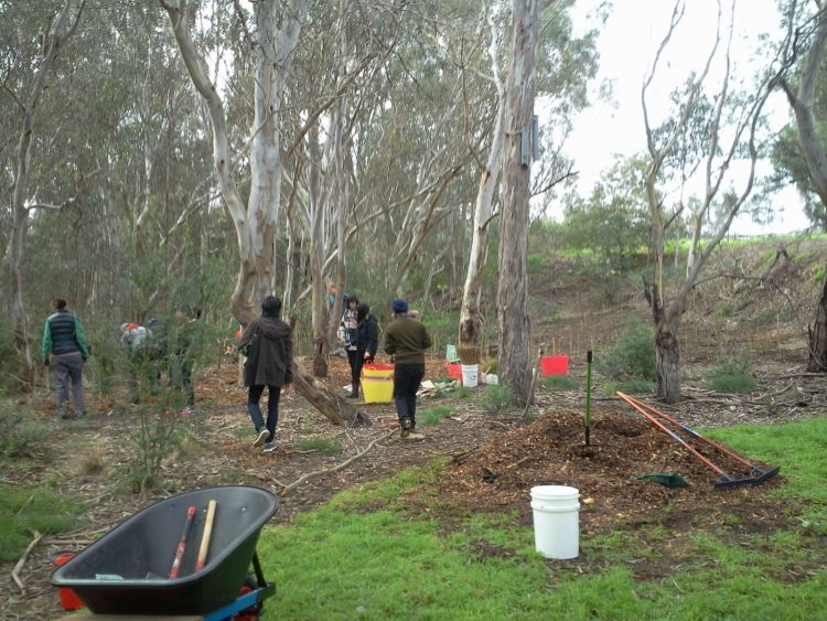 planting the eastern picnic area